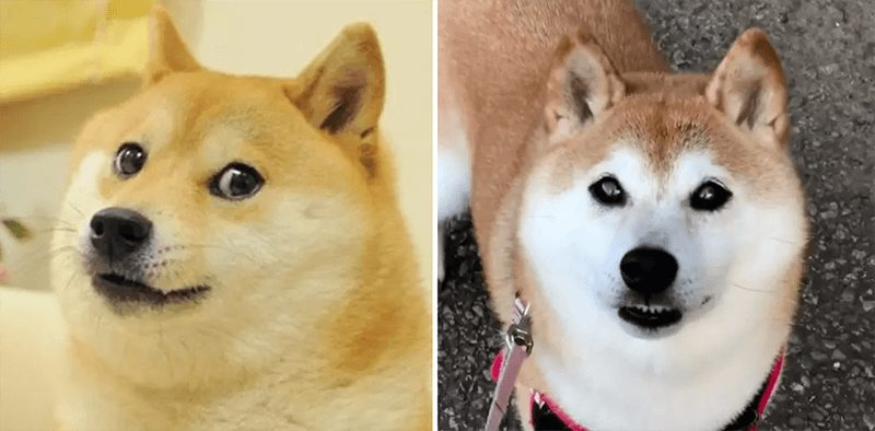 wersm-internet-memes-then-and-now-doge