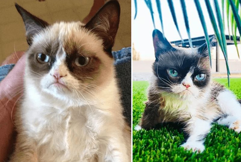 wersm-internet-memes-then-and-now-grumpy-cat
